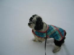 Fred_in_snow_8
