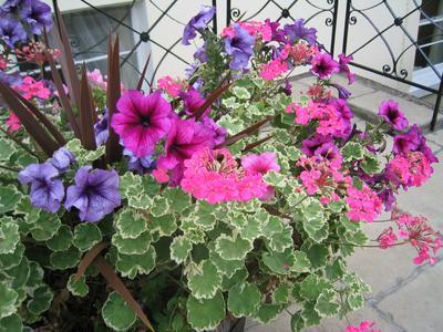 cheltenham_flowers