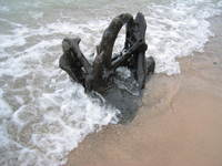 Stump_in_water