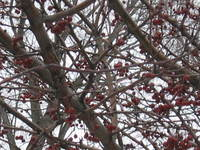 Winter_tree_