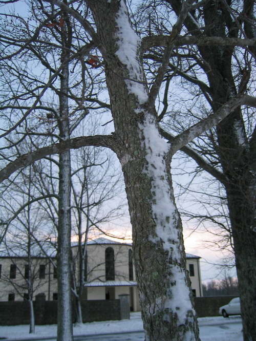 Winter_at_the_abbey