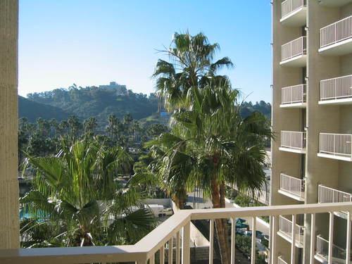 Palm_trees_hurray
