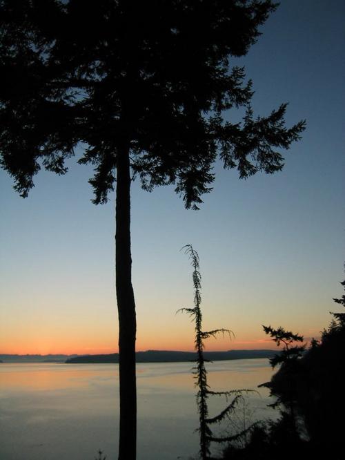 Sunrise_jesus_tree_1